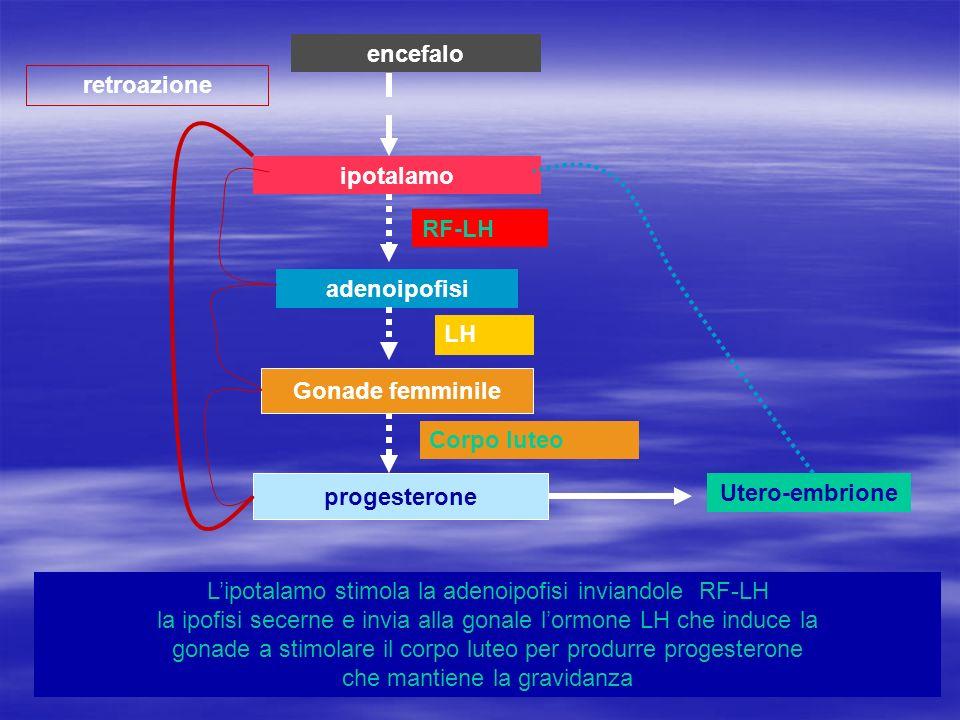 encefalo retroazione. ipotalamo. RF-LH. adenoipofisi. LH. Gonade femminile. Corpo luteo. progesterone.