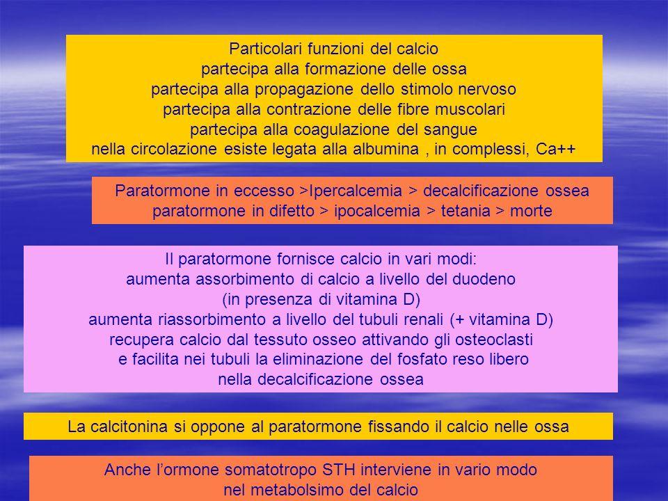 La calcitonina si oppone al paratormone fissando il calcio nelle ossa