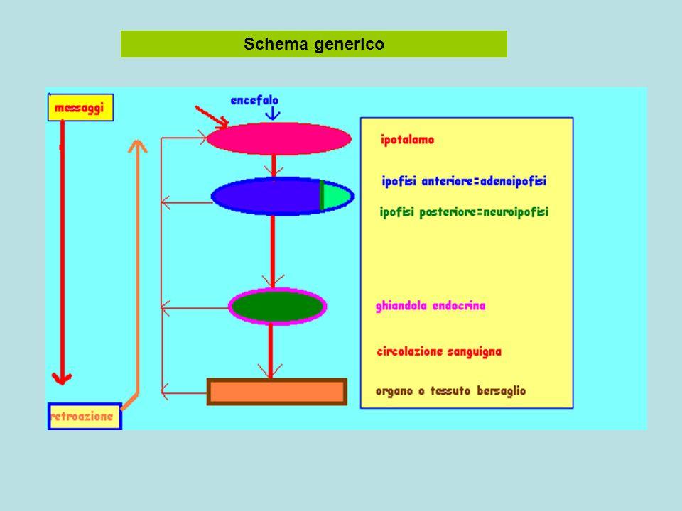 Schema generico