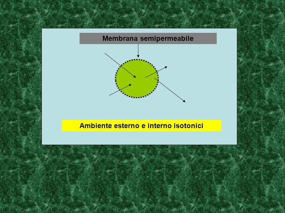 Membrana semipermeabile Ambiente esterno e interno isotonici