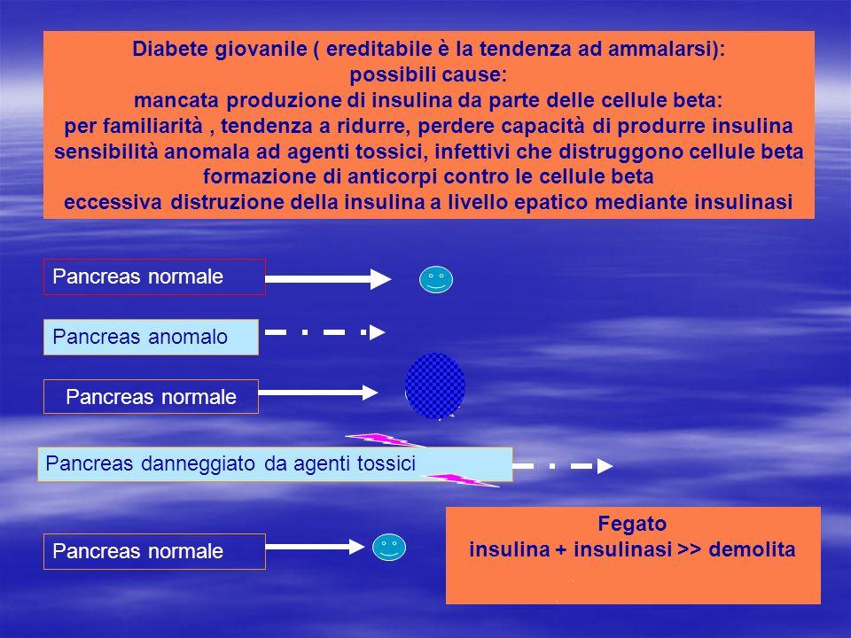 Fegato insulina + insulinasi >> demolita