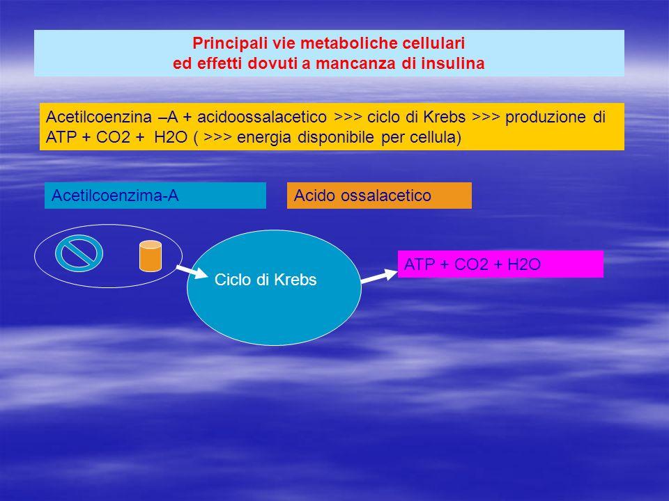 Principali vie metaboliche cellulari ed effetti dovuti a mancanza di insulina