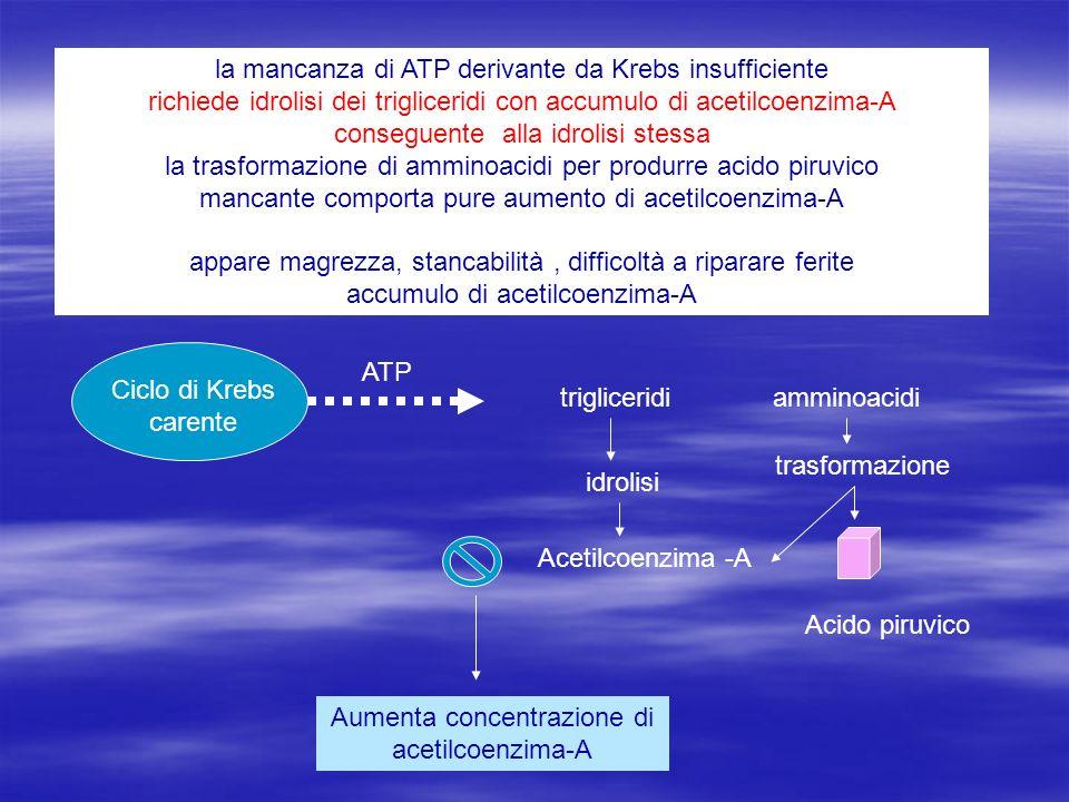 Aumenta concentrazione di acetilcoenzima-A