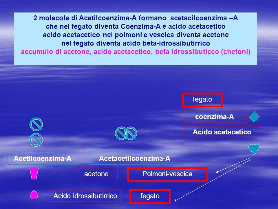 Acetacetilcoenzima-A