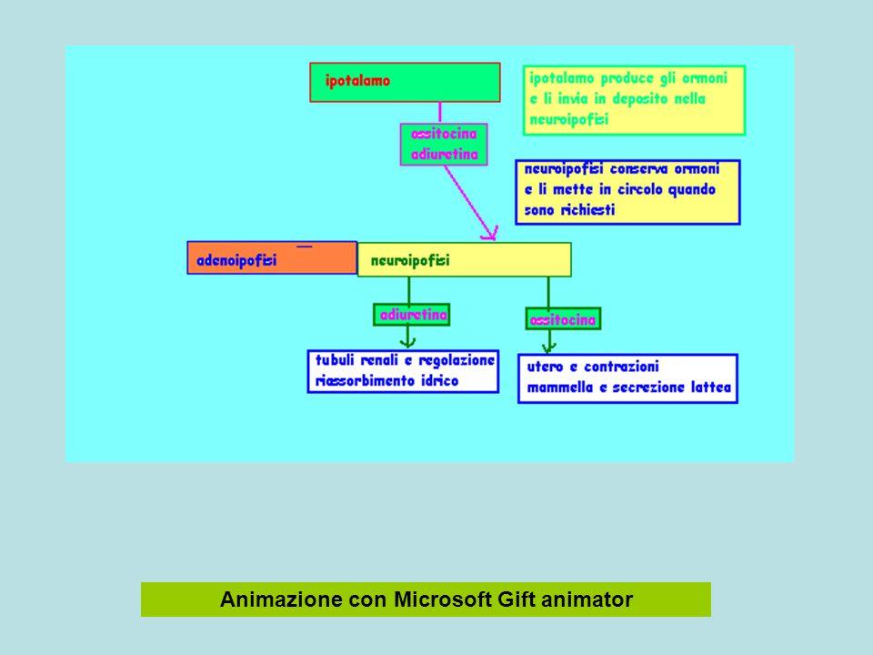 Animazione con Microsoft Gift animator