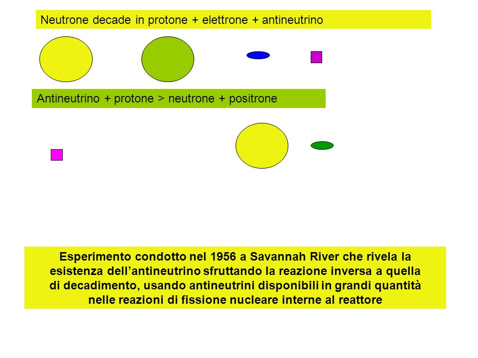 Neutrone decade in protone + elettrone + antineutrino