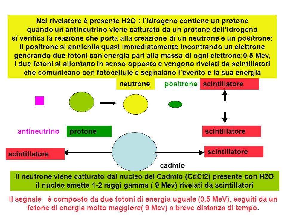 Nel rivelatore è presente H2O : l'idrogeno contiene un protone quando un antineutrino viene catturato da un protone dell'idrogeno si verifica la reazione che porta alla creazione di un neutrone e un positrone: il positrone si annichila quasi immediatamente incontrando un elettrone generando due fotoni con energia pari alla massa di ogni elettrone:0.5 Mev, i due fotoni si allontano in senso opposto e vengono rivelati da scintillatori che comunicano con fotocellule e segnalano l'evento e la sua energia