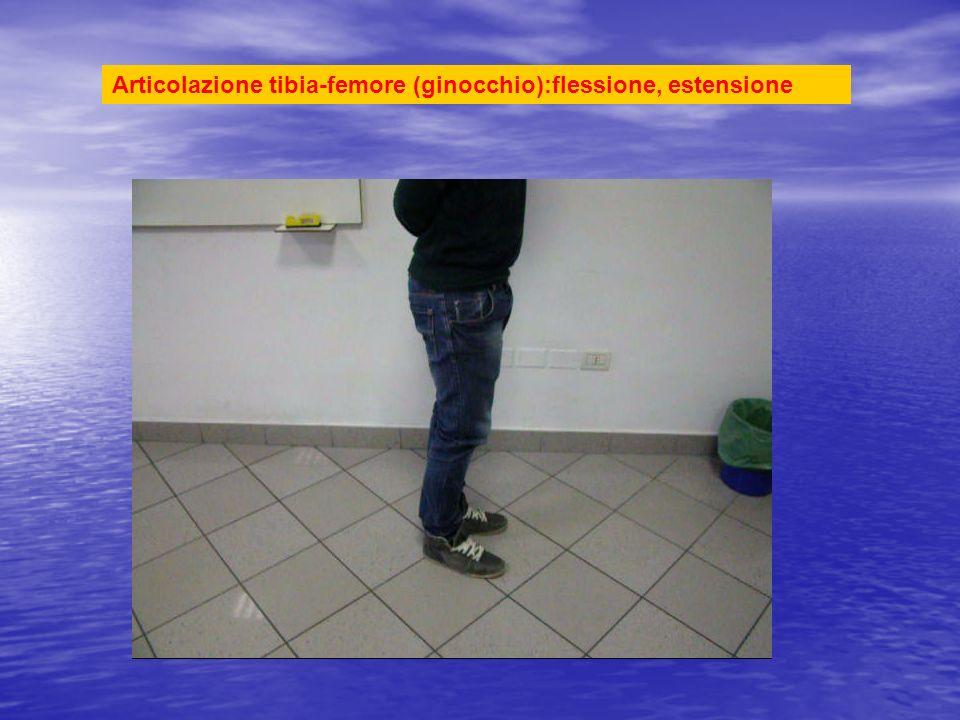 Articolazione tibia-femore (ginocchio):flessione, estensione
