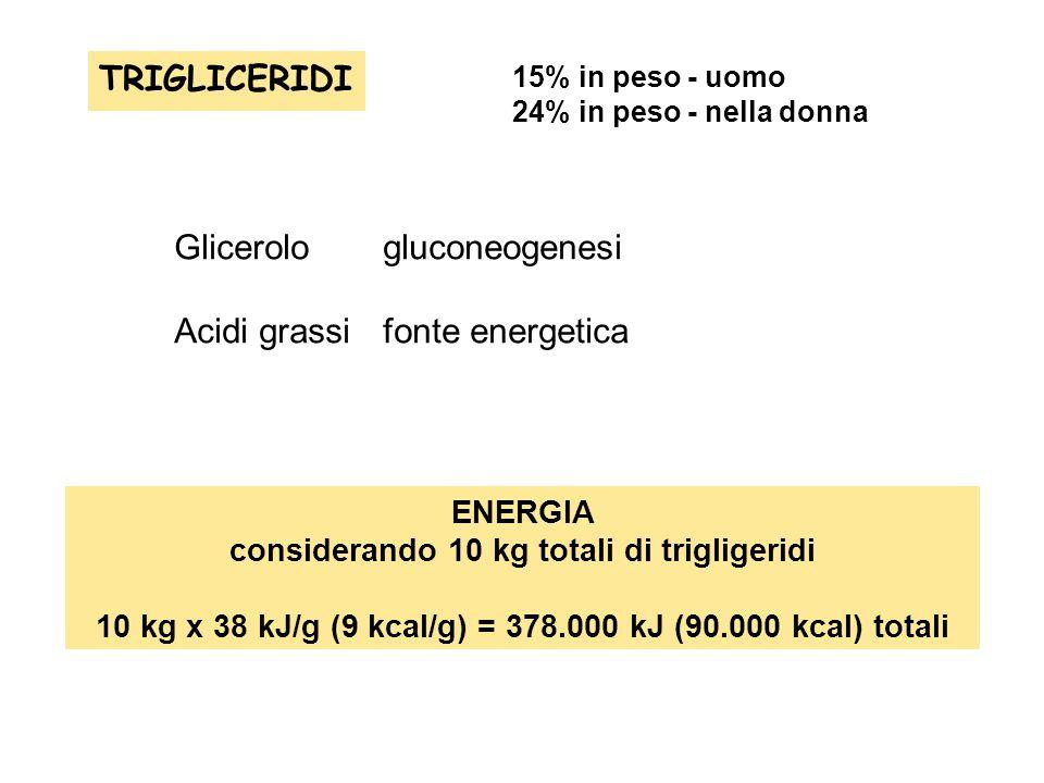 Glicerolo gluconeogenesi Acidi grassi fonte energetica