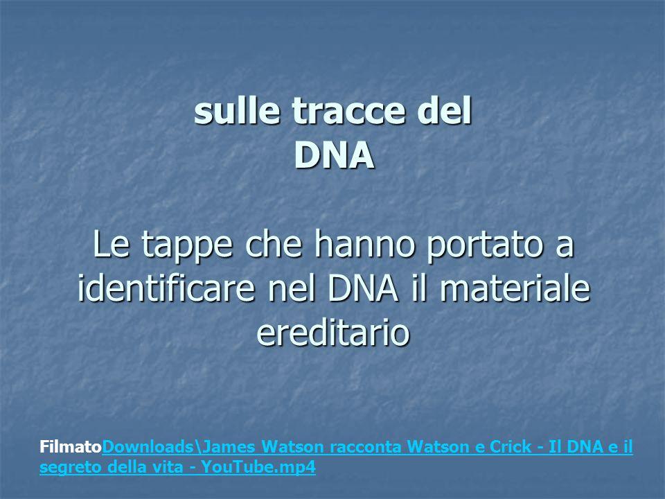 sulle tracce del DNA Le tappe che hanno portato a identificare nel DNA il materiale ereditario
