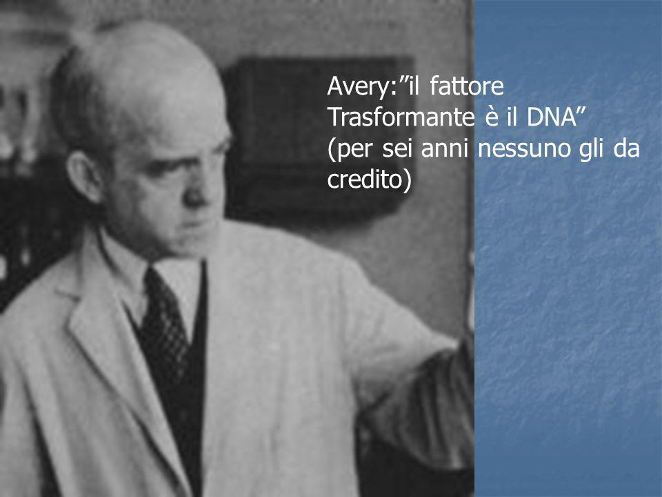 Avery: il fattore Trasformante è il DNA (per sei anni nessuno gli da credito)