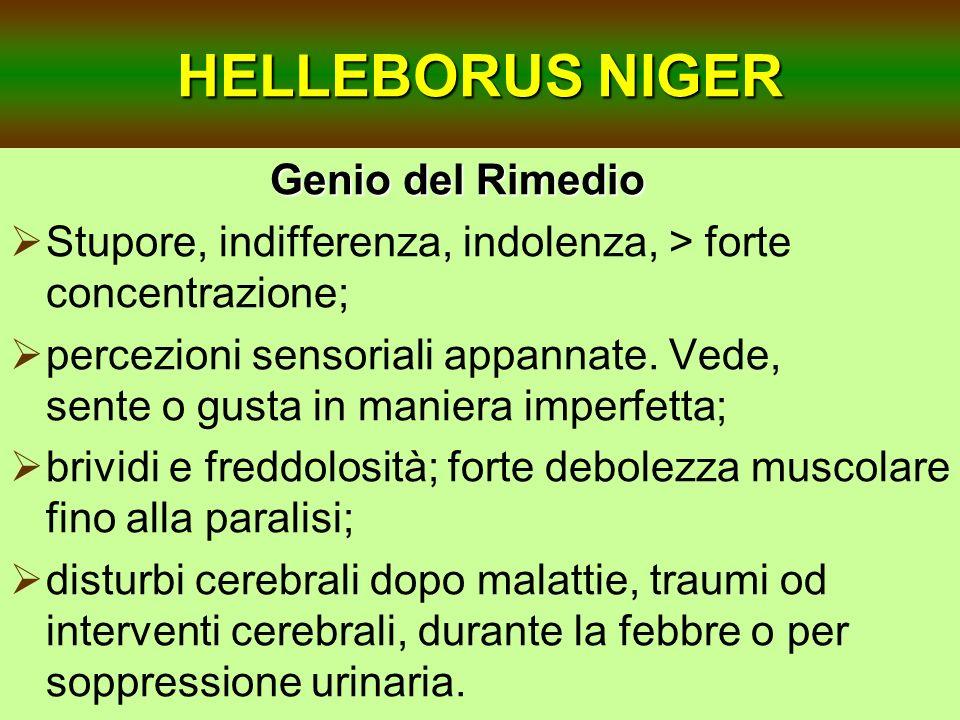 HELLEBORUS NIGER Genio del Rimedio