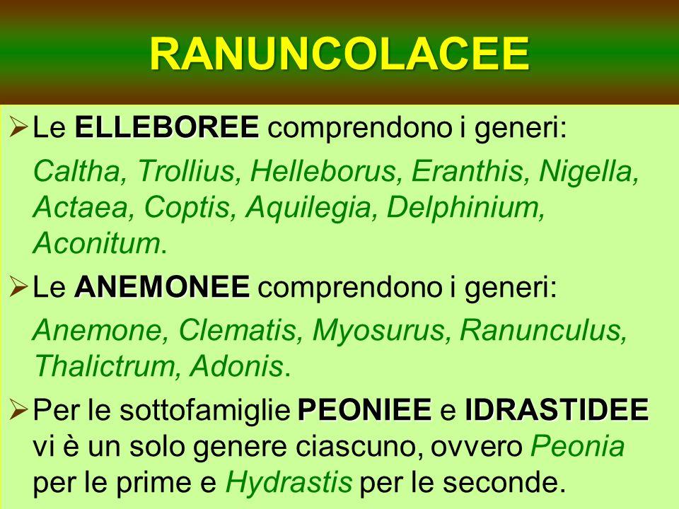 RANUNCOLACEE Le ELLEBOREE comprendono i generi:
