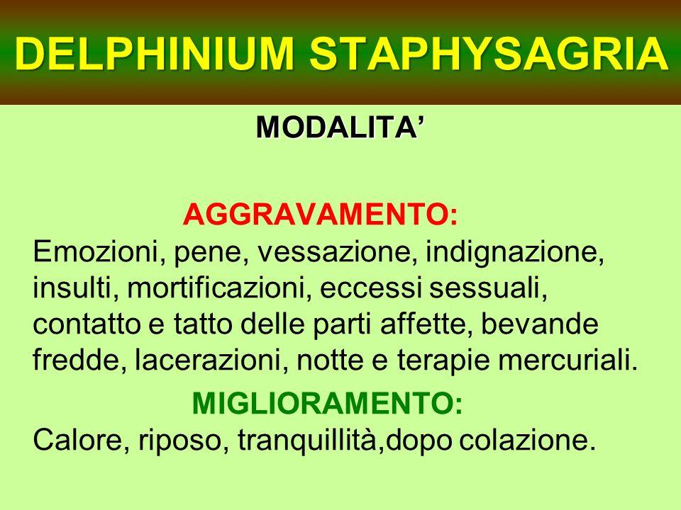 DELPHINIUM STAPHYSAGRIA