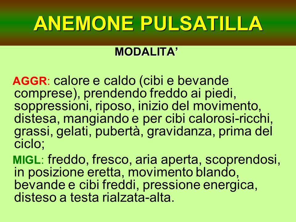 ANEMONE PULSATILLA MODALITA'