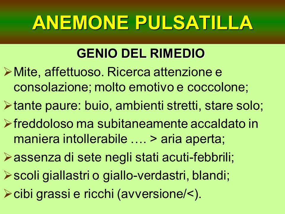 ANEMONE PULSATILLA GENIO DEL RIMEDIO