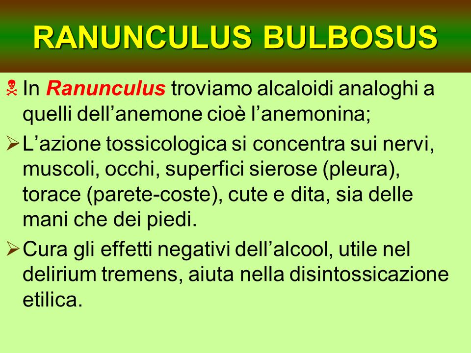 RANUNCULUS BULBOSUS In Ranunculus troviamo alcaloidi analoghi a quelli dell'anemone cioè l'anemonina;