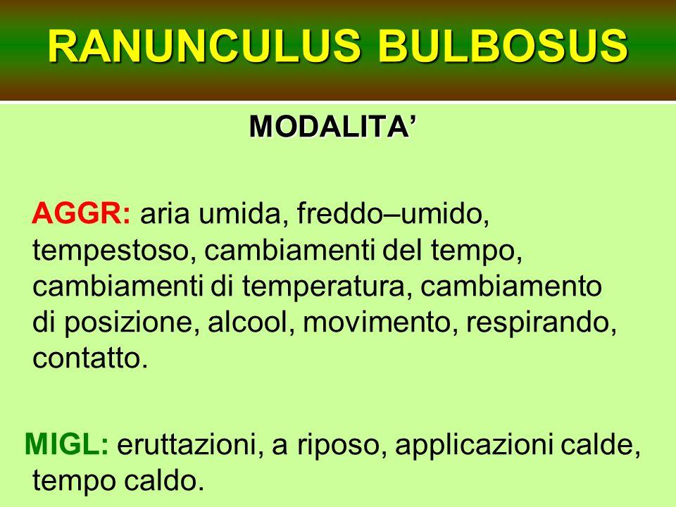 RANUNCULUS BULBOSUS MODALITA'