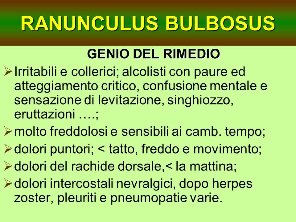 RANUNCULUS BULBOSUS GENIO DEL RIMEDIO