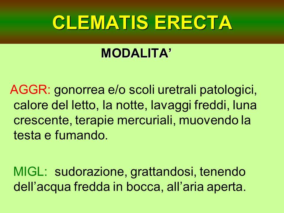 CLEMATIS ERECTA MODALITA'