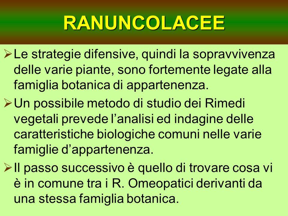 RANUNCOLACEE Le strategie difensive, quindi la sopravvivenza delle varie piante, sono fortemente legate alla famiglia botanica di appartenenza.
