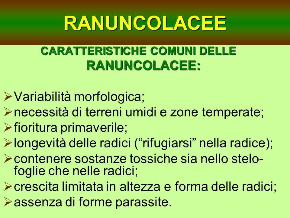 RANUNCOLACEE Variabilità morfologica;
