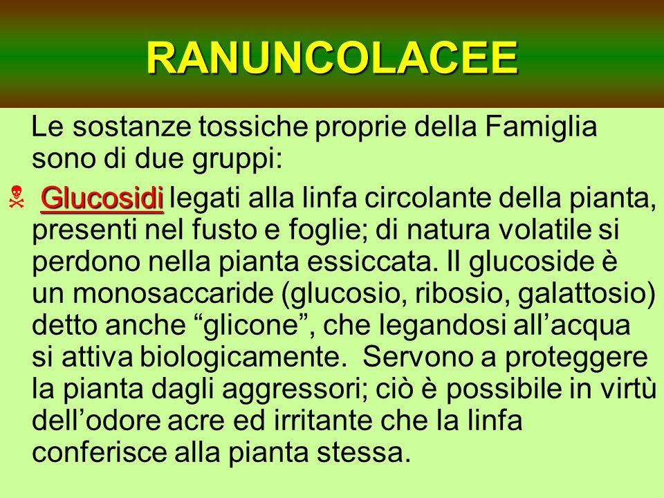 RANUNCOLACEE Le sostanze tossiche proprie della Famiglia sono di due gruppi: