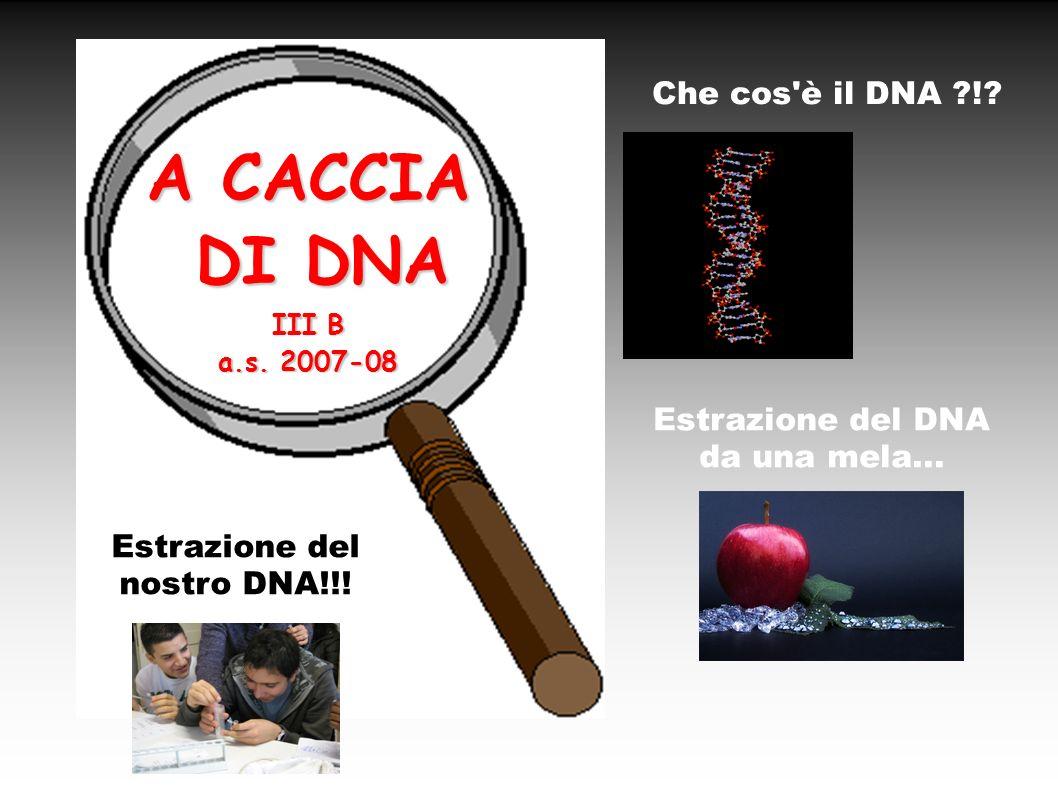 Estrazione del DNA da una mela... Estrazione del nostro DNA!!!