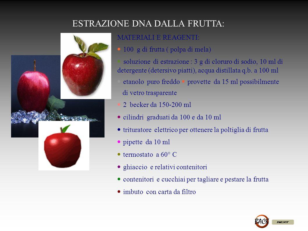 ESTRAZIONE DNA DALLA FRUTTA: