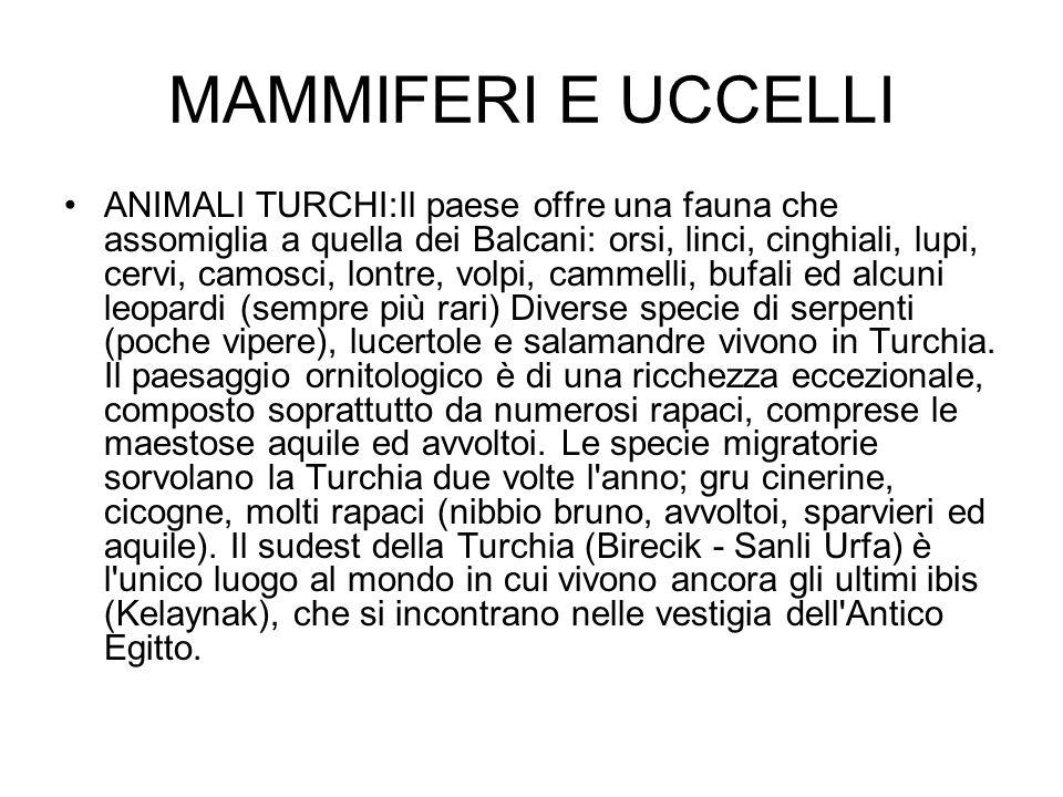 MAMMIFERI E UCCELLI