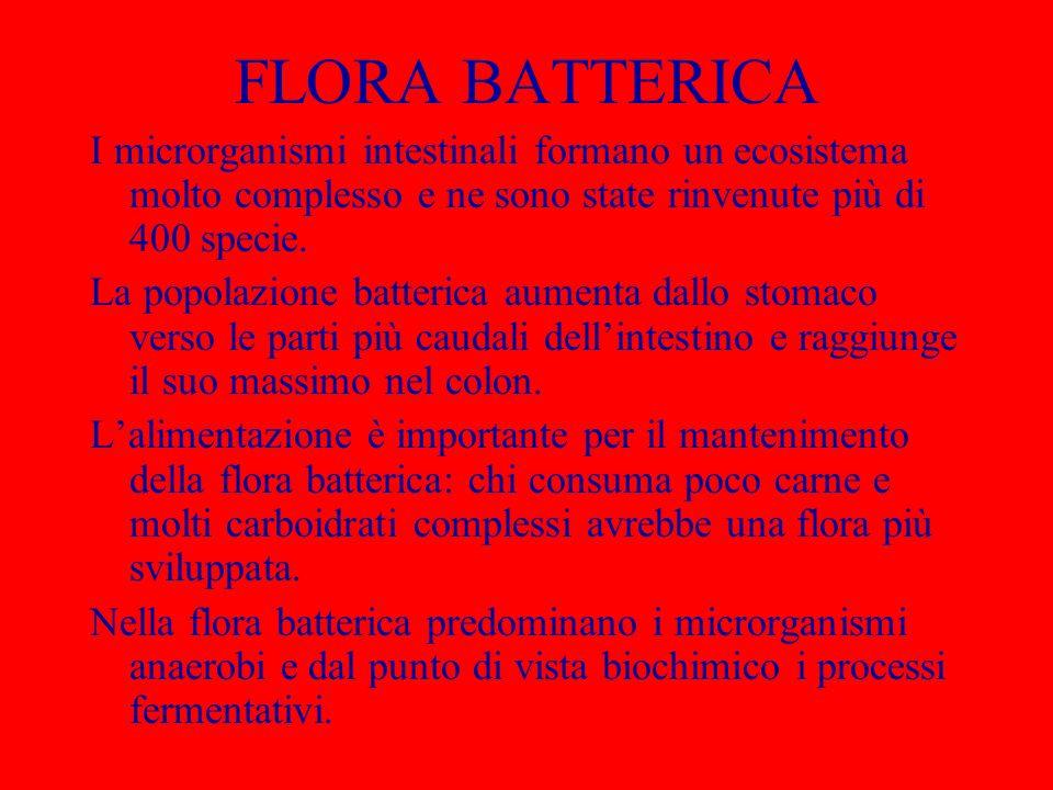 FLORA BATTERICA I microrganismi intestinali formano un ecosistema molto complesso e ne sono state rinvenute più di 400 specie.