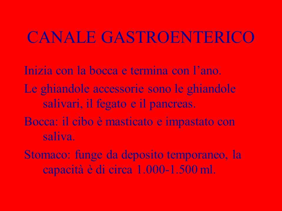 CANALE GASTROENTERICO