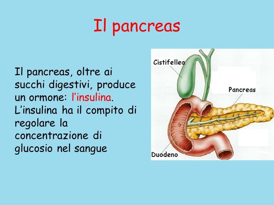 Il pancreas Il pancreas, oltre ai succhi digestivi, produce un ormone: l'insulina.