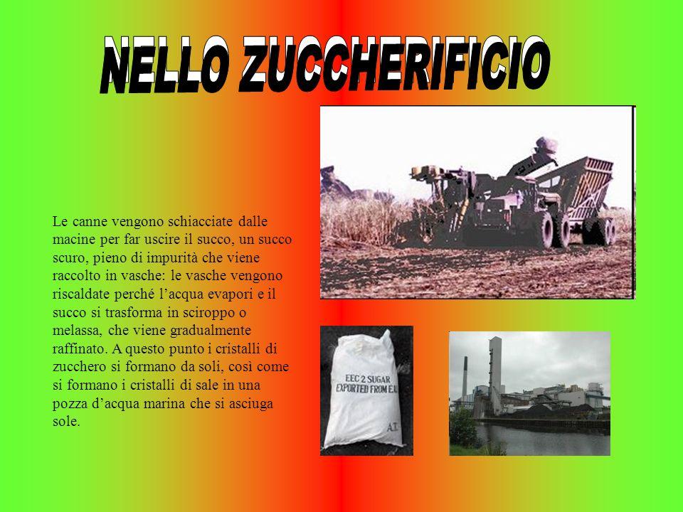NELLO ZUCCHERIFICIO NELLO ZUCCHERIFICIO