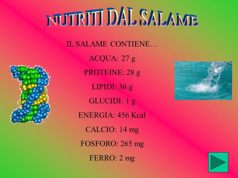 NUTRITI DAL SALAME IL SALAME CONTIENE… ACQUA: 27 g PROTEINE: 28 g