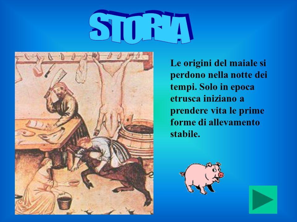 STORIA Le origini del maiale si perdono nella notte dei tempi.