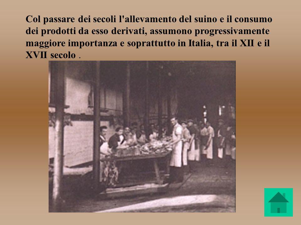 Col passare dei secoli l allevamento del suino e il consumo dei prodotti da esso derivati, assumono progressivamente maggiore importanza e soprattutto in Italia, tra il XII e il XVII secolo .