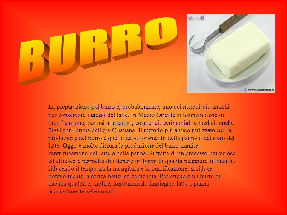 BURRO ORIGINI DEL BURRO
