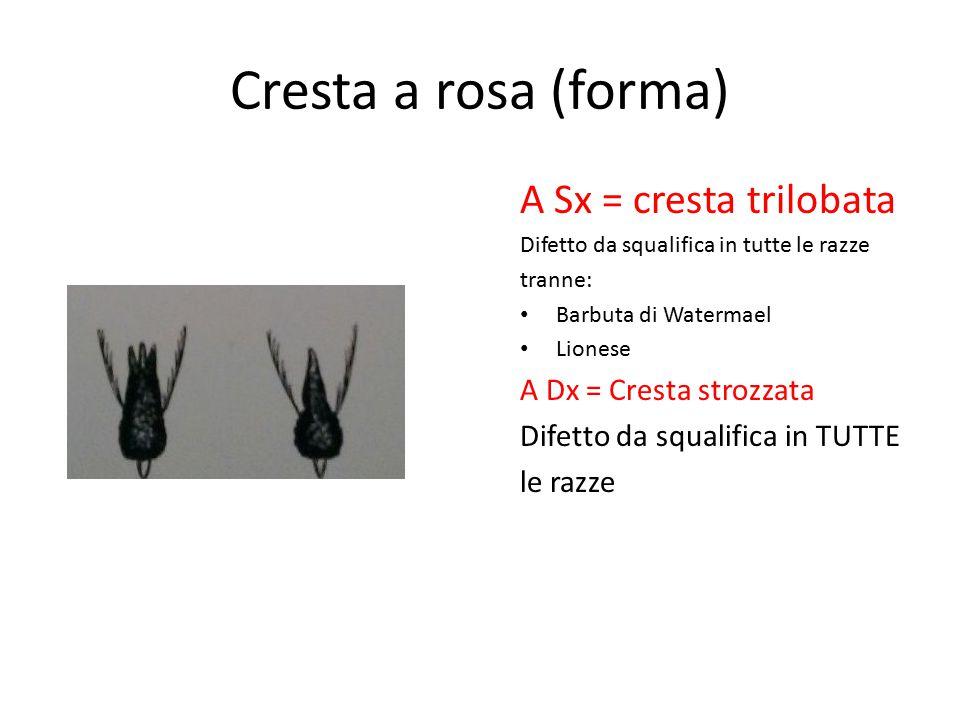 Cresta a rosa (forma) A Sx = cresta trilobata A Dx = Cresta strozzata
