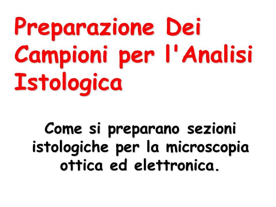 Preparazione Dei Campioni per l Analisi Istologica