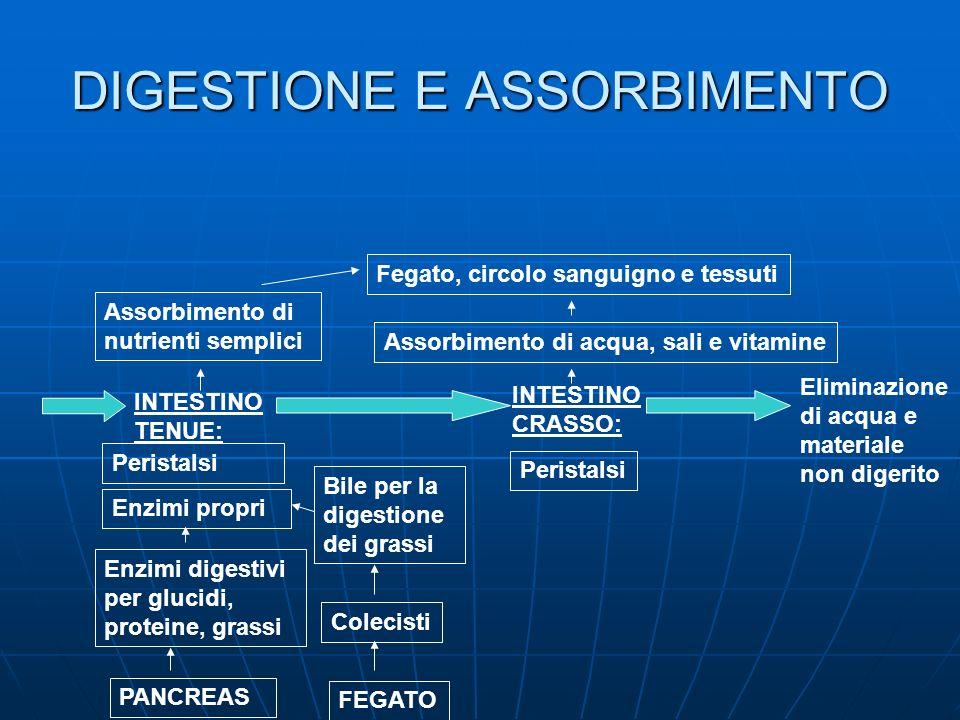 DIGESTIONE E ASSORBIMENTO