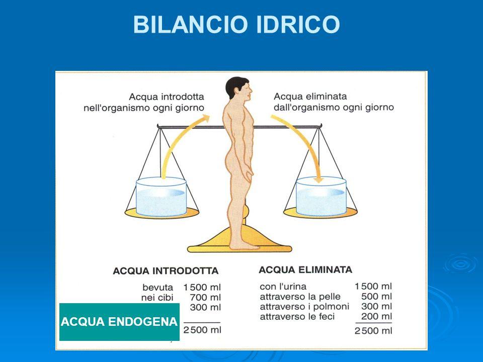 BILANCIO IDRICO ACQUA ENDOGENA