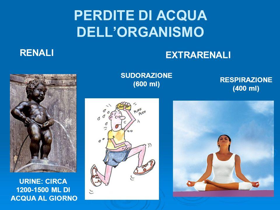 PERDITE DI ACQUA DELL'ORGANISMO
