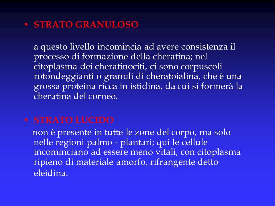 STRATO GRANULOSO