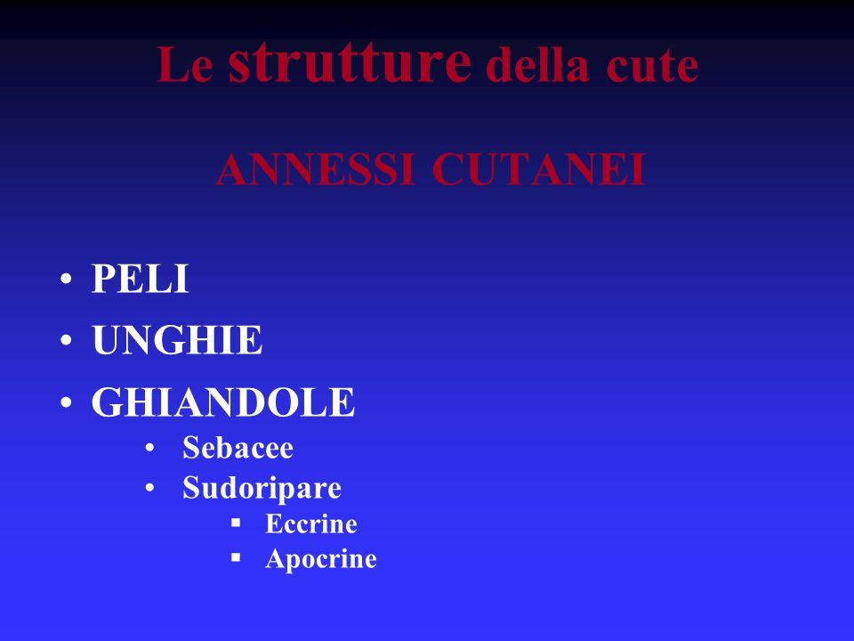 Le strutture della cute