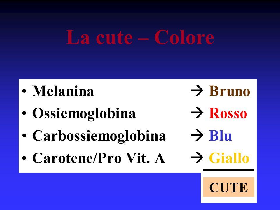 La cute – Colore Melanina  Bruno Ossiemoglobina  Rosso