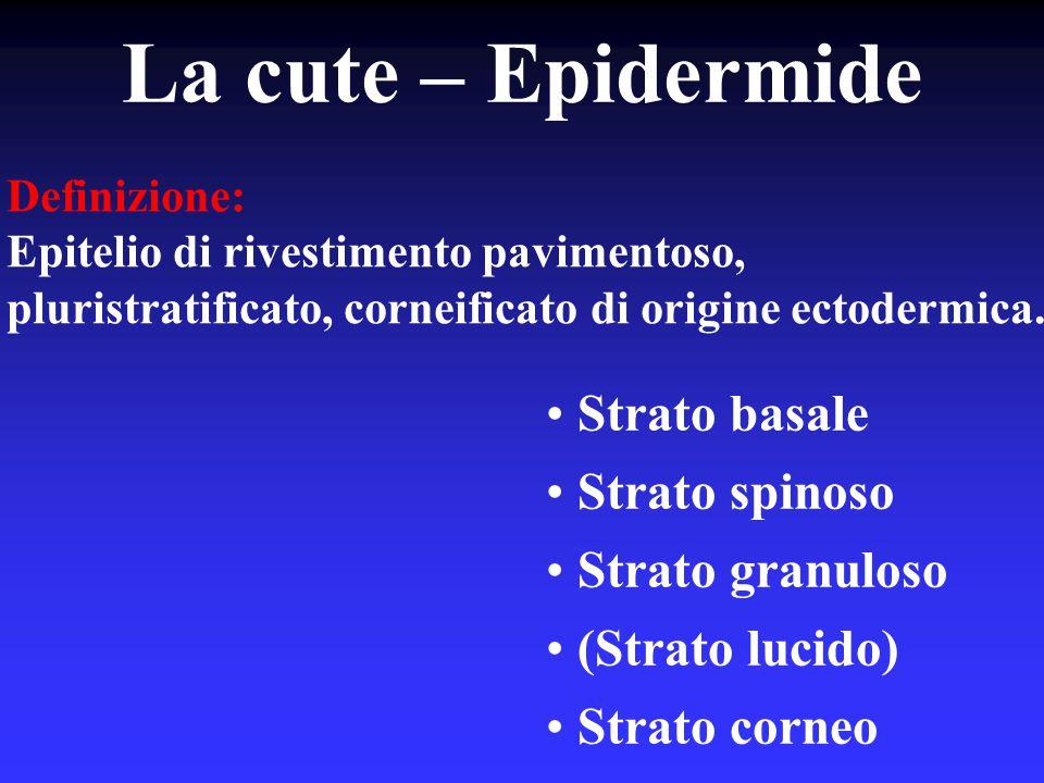 La cute – Epidermide Strato basale Strato spinoso Strato granuloso