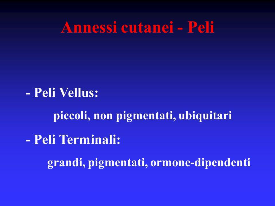 Annessi cutanei - Peli - Peli Vellus: - Peli Terminali: