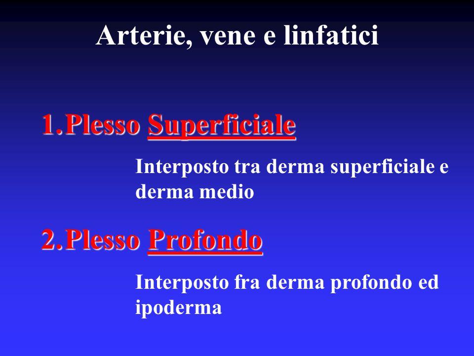 Arterie, vene e linfatici
