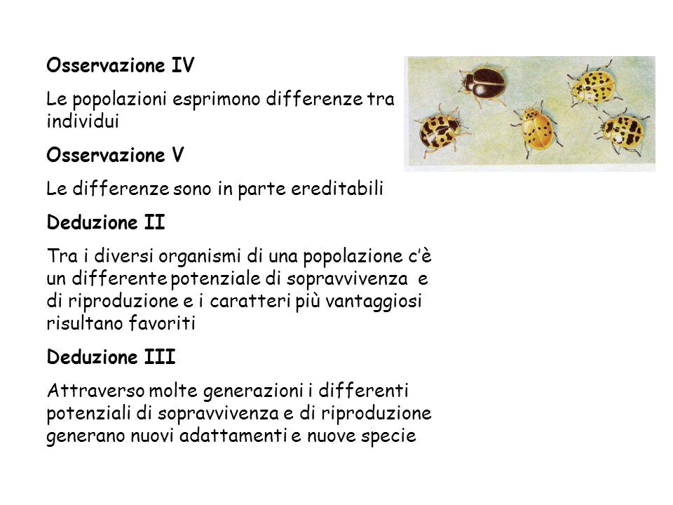 Osservazione IV Le popolazioni esprimono differenze tra individui. Osservazione V. Le differenze sono in parte ereditabili.